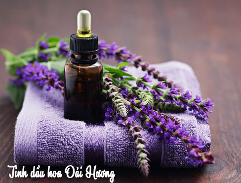 Tinh dầu hoa oải hương với tác dụng trị bệnh